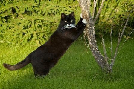 आपकी बिल्ली के लिए आदर्श खुरचनी खोजने के लिए 8 विचार