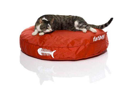 नायलॉन सहायक उपकरण, मीन बिल्लियों के लिए एक समाधान