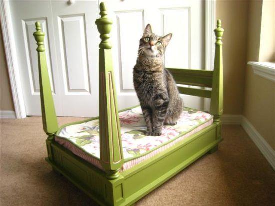अपनी प्यारी बिल्ली के लिए एक लक्जरी बिस्तर कैसे बनाएं