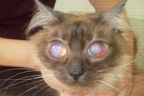 बिल्लियों की उम्र की गणना करें