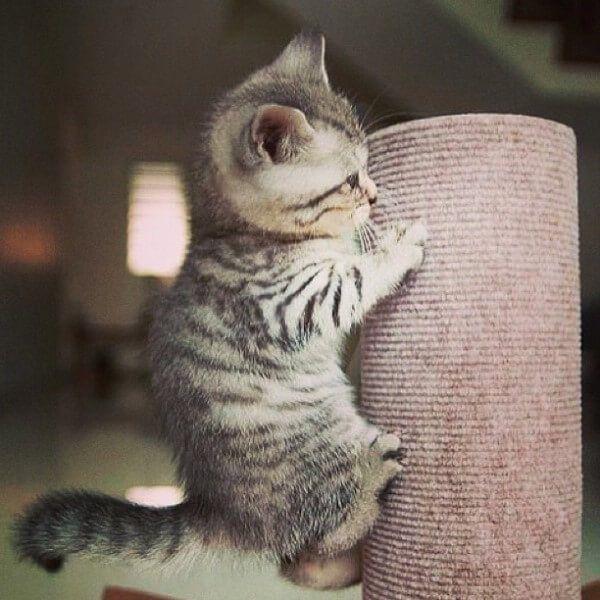 बिल्लियों की उम्र की गणना कैसे की जाती है