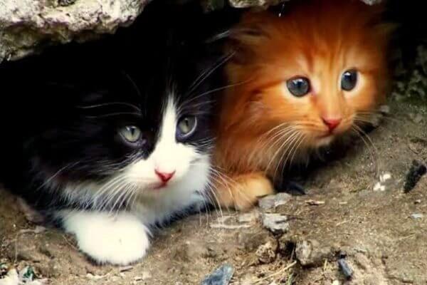 एक भटक बिल्ली की उम्र कैसे जानना है