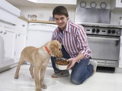 वयस्क कुत्तों के लिए भोजन बनाम पिल्ले के लिए भोजन