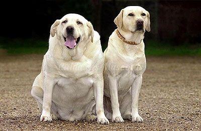 कुत्ते मोटापे से बचने के लिए युक्तियाँ