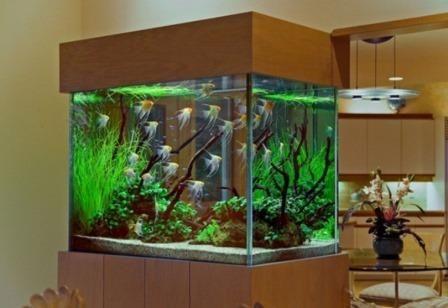 घर पर एक मछली टैंक रखने के लिए सुझाव