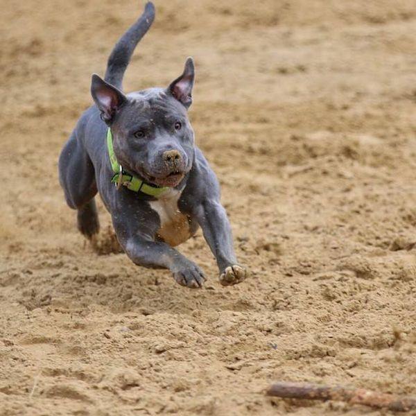 कुत्तों के लिए शारीरिक व्यायाम