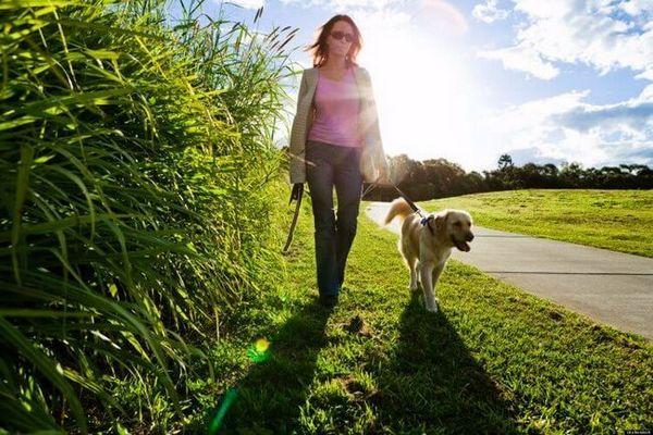 चलने के लिए कुत्ते को कितनी बार लेते हैं