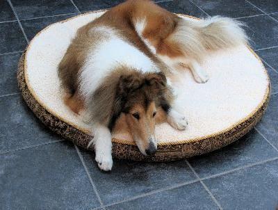 एक बीमार कुत्ते के लिए घर का बना आहार