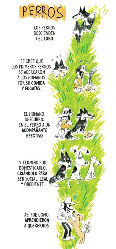 घरेलू कुत्ते की उत्पत्ति क्या है