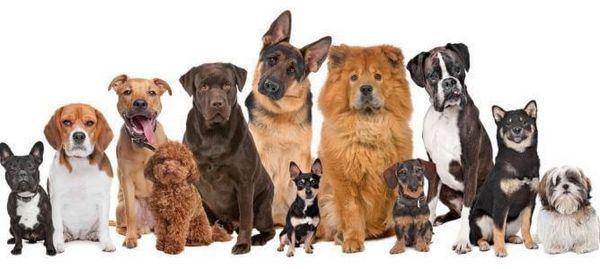 दौड़-ऑफ-कुत्तों-निर्मित-दर-व्यक्ति