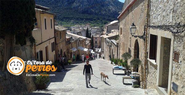 कुत्ता चलने वाली सड़क