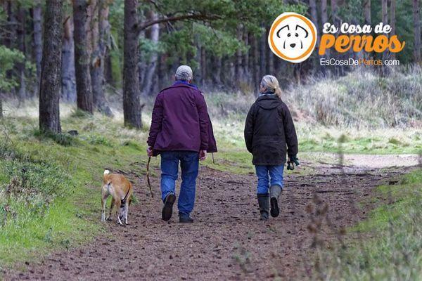 कुत्ता चलना