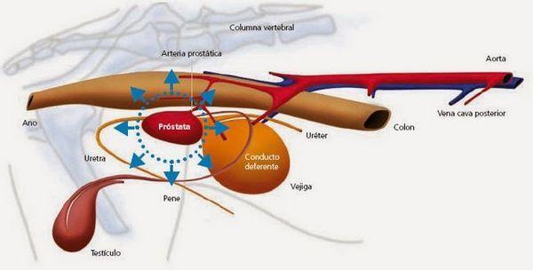 प्रोस्टेटिक रोग