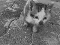 `बिल्ली`: एक सितारा की आवाज़ (अध्याय 1)