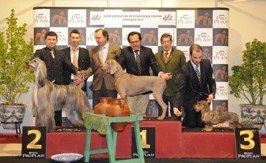 ग्रेनेडा। Xxviii अंतरराष्ट्रीय कुत्ता शो