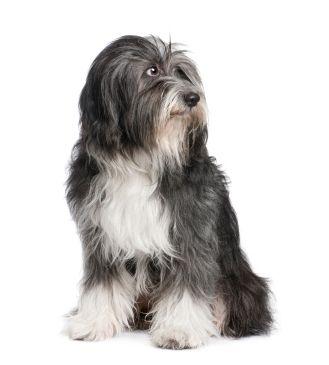 क्या कुत्ते के आहार में बदलाव से बालों को बहाना पड़ सकता है?