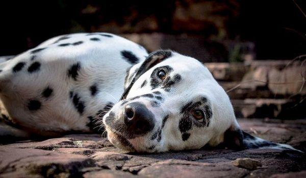 कुत्ते को अच्छी तरह से खिलाया जाता है क्यों?