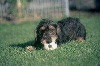 अपने कुत्ते के साथ खेलना, एक शौक से ज्यादा