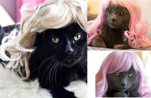 किट्टी wigs!: जब बिल्लियों फैशन wigs पहनते हैं