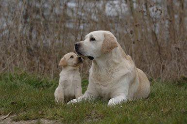 कुत्ते प्रजनन