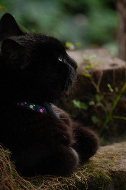 जादुई क्षण: मुसब्बर पर सपना बिल्ली