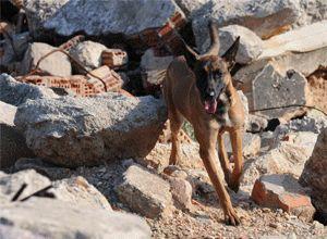 कुत्ते जो इंद्रधनुष से बचाव करते हैं
