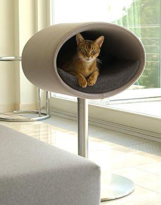 पालतू अंदरूनी: एक दस घर में आरामदायक बिल्लियों