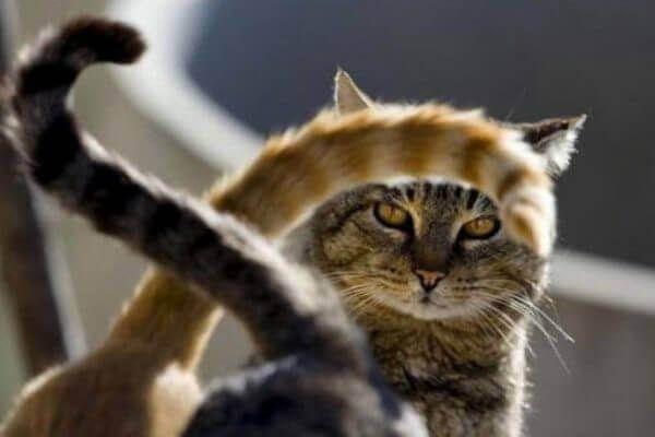 बिल्ली पूंछ आंदोलन