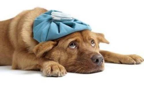 कुत्ते रोते हैं क्योंकि वे बुरा महसूस करते हैं