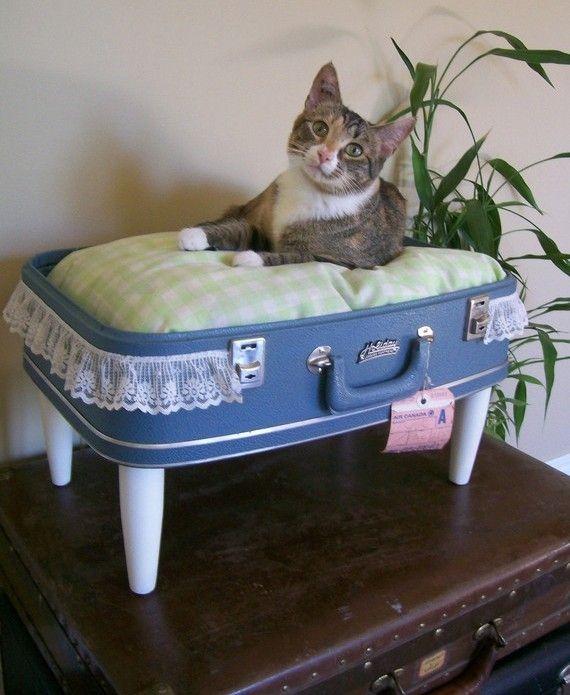 पुरानी सूटकेस के साथ बने बिल्लियों के लिए सुंदर बिस्तर