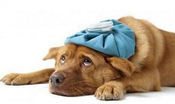 अपनी स्वास्थ्य स्थिति को मजबूत करने के लिए हमें अपने पालतू जानवरों के साथ क्या करना चाहिए