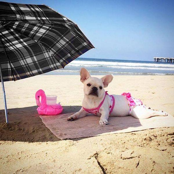 कुत्ते sunbathes क्यों कारणों