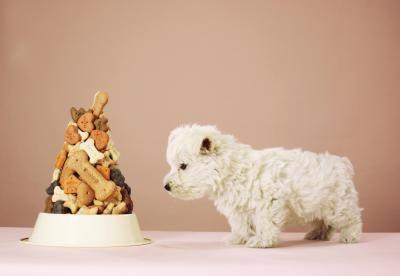 जीवन के अपने पहले महीनों में पिल्ला के भोजन में परिवर्तन कैसे होता है