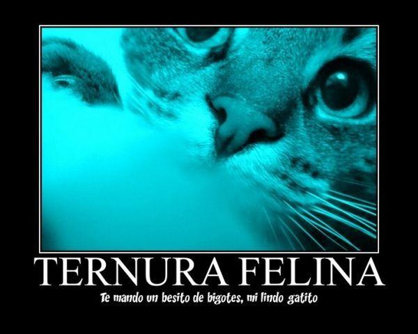 एक संदेश के साथ एक पोस्टकार्ड में अपनी बिल्ली की तस्वीर को बदलें