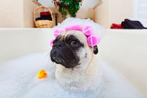अपने कुत्ते को स्नान करते समय चालें