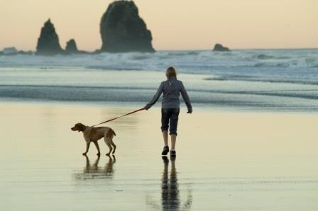 आपके कुत्ते की तस्वीर आपको चलने की जरूरत है