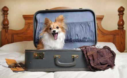 छुट्टी कुत्ता