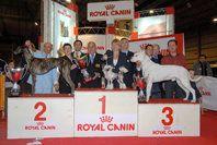 Xxviii अंतरराष्ट्रीय कुत्ता शो